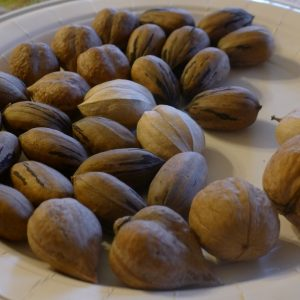 Homegrown nuts - carpathian walnuts, pecans, hickory, and heartnuts