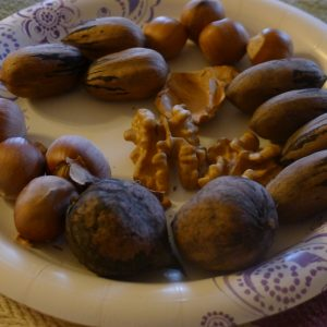 Homegrown nuts - walnuts, pecans, and hazelnuts