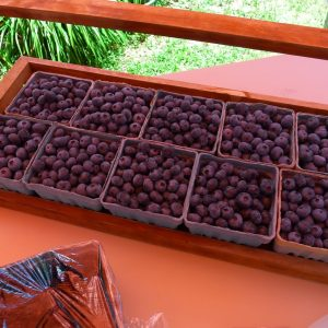 2017 Summer Picnic - blueberries up for auction